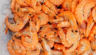 fresh_shrimp